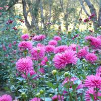 Gardens-2nd Place -Diane Kolb-Land of Enchantment