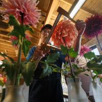 Shows-1st Place-Bill Meyer-Jim Monahan measures a dahlia