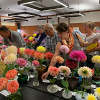 Shows-2nd Place-Beverly Dahlstedt-San Leandro Dahlia Show
