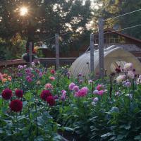 Gardens-HM-Trevor Hoff-Trevor's Garden at Daybreak