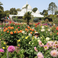 Gardens-3rd Place-Beverly Dahlstedt-Dahlia Dell