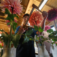 Shows-1st Place-Bill Meyer-Jim Monahan measures a dahlia
