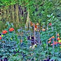 2nd Place-Gardens – Forest Garden - Mel Epstein