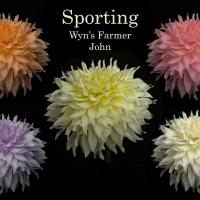 2nd Place-Digital Darkroom - Sport of Wyn's Farmer John - Trevor Hoff