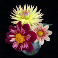 2nd Place-Two or more blooms - Trio of Blooms - Louise Henriksen