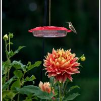 2nd place - OMG and Hummingbird - Loujeanne Cuje