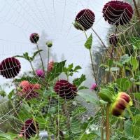 3rd Place-Gardens – Garden Web - Anne Maria Jacobson