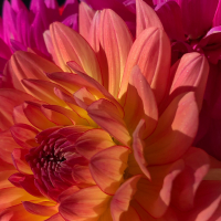 3rd Place-Macro View – Shimmering Goddess - Diana Cone