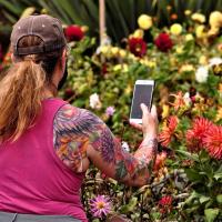 HM-Gardens - Which is more beautiful - David Xu