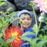 Dahlia Gardens - HM - Alysia Obina - Hide and Seek
