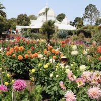 Dahlia Gardens - 2nd Place - Bev Dahlstedt - Dahlia Dell, Golden Gate Park, San Francisco