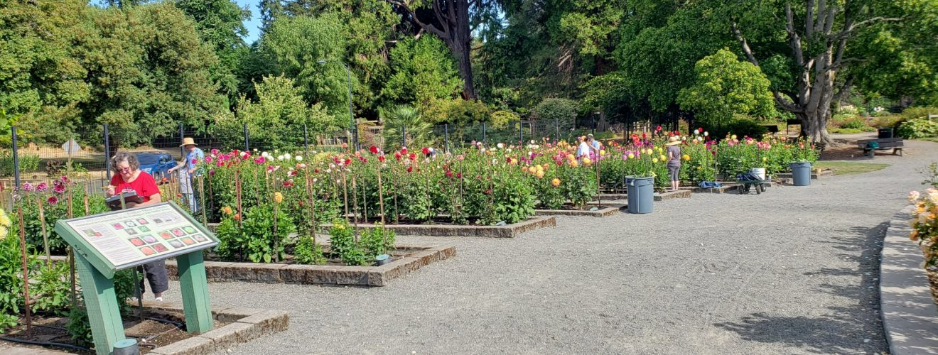 Tahoma Trial Garden 2020